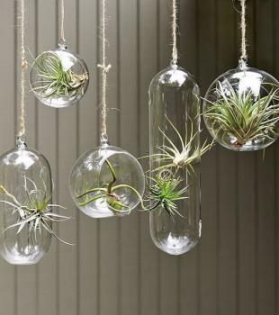 Plantas na decoração tornam o ambiente mais alegre