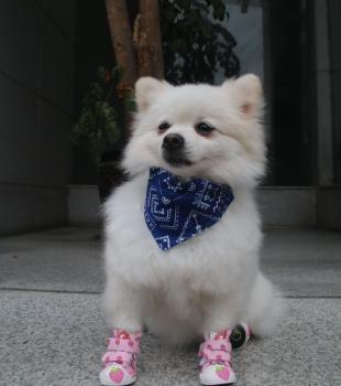 Calçados para cachorros